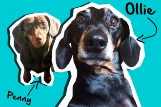 Hello - It's us, Ollie & Penny!