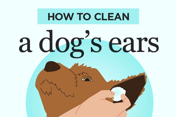 How To Clean Your Dogs Ears!