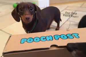 article-standard-image-690x460-pooch-post-arrival