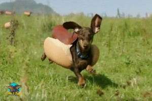 Heinz Super Bowl Commercial 2016