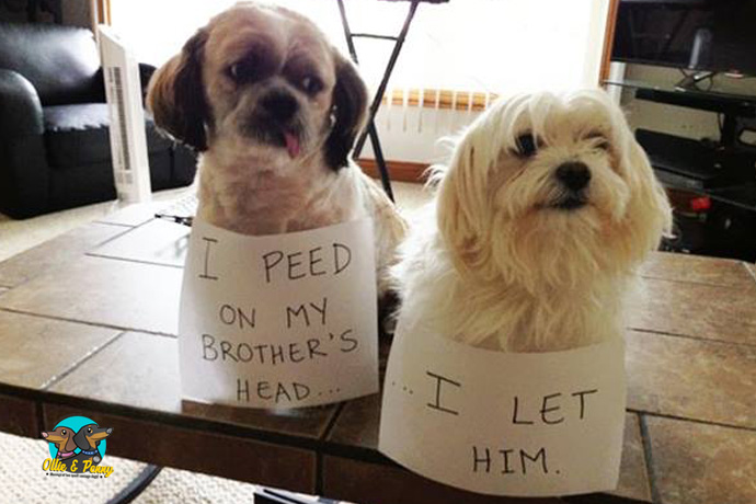 article-standard-image-690x460-naughty-pets1