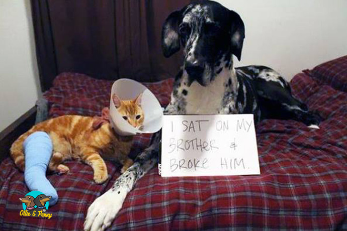article-standard-image-690x460-naughty-pets4