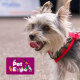 Lu's Pet Expo Report from Mallow Co. Cork!