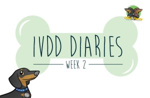 article-standard2-image-750x490-ivdd-diaries-wk2