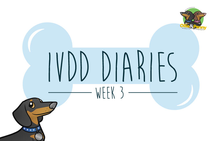 article-standard2-image-750x490-ivdd-diaries-wk3