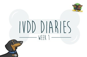 article-standard2-image-750x490-ivdd-diaries2