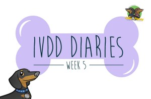 IVDD Diaries - Ollie & Penny