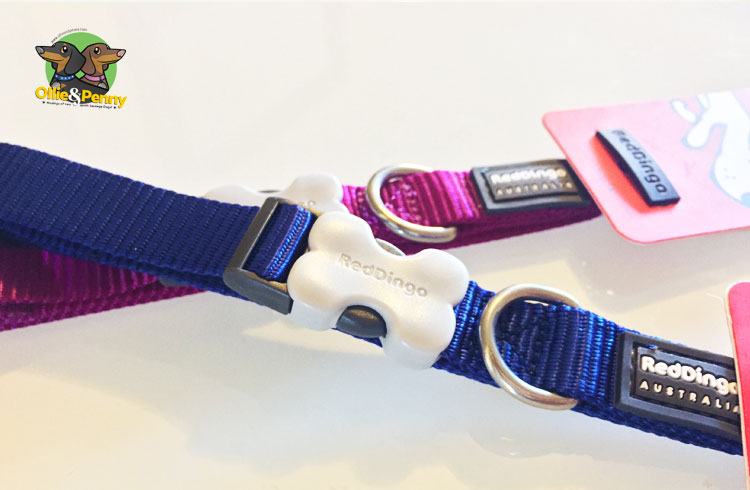 article-standard2-image-750x490_newcollars6