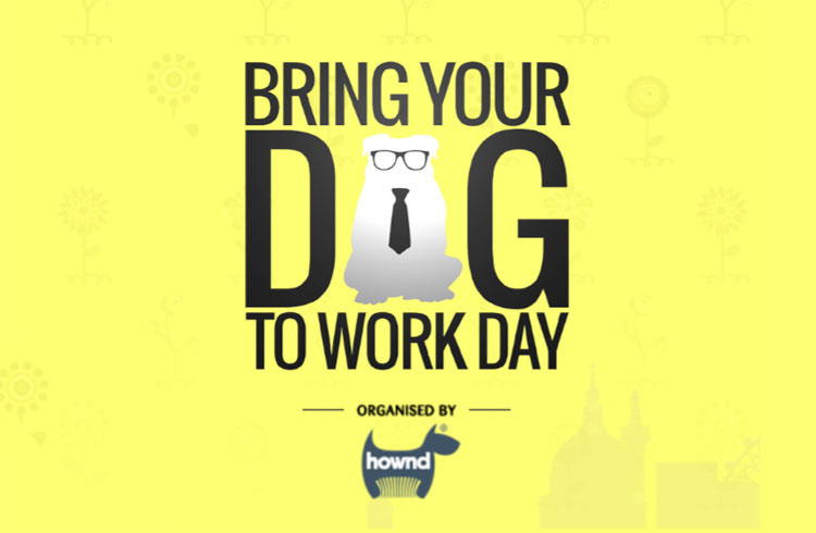Bring Your Dog To Work Day 2017 - Ollie & Penny Blog - Ireland