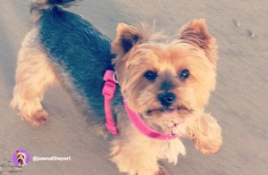 Paws at the Port - Bella & Laura - Ollie & Penny - Ireland