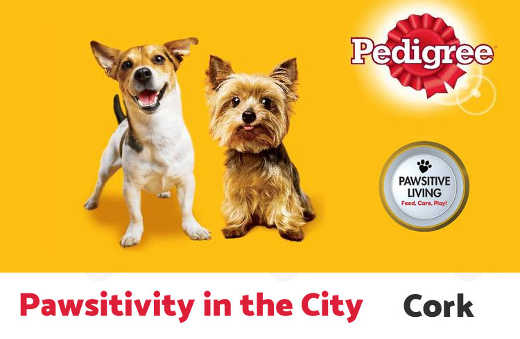 Pawsitivity in the City 2017 - Cork - Ollie & Penny