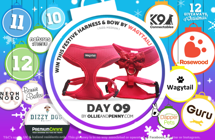 Day 09 - Wagytail -12 Giveaways of Christmas - Ollie & Penny Blog Ireland