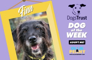 Meet Finn! Dogs Trust - Dog of the Week - Ollie & Penny Blog Ireland