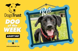 Meet Rex! Dogs Trust - Dog of the Week - Ollie & Penny Blog Ireland