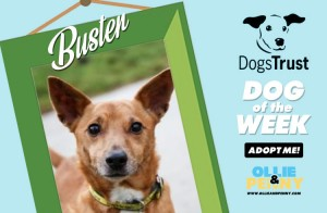 Meet Buster! Dogs Trust - Dog of the Week - Ollie & Penny Blog Ireland