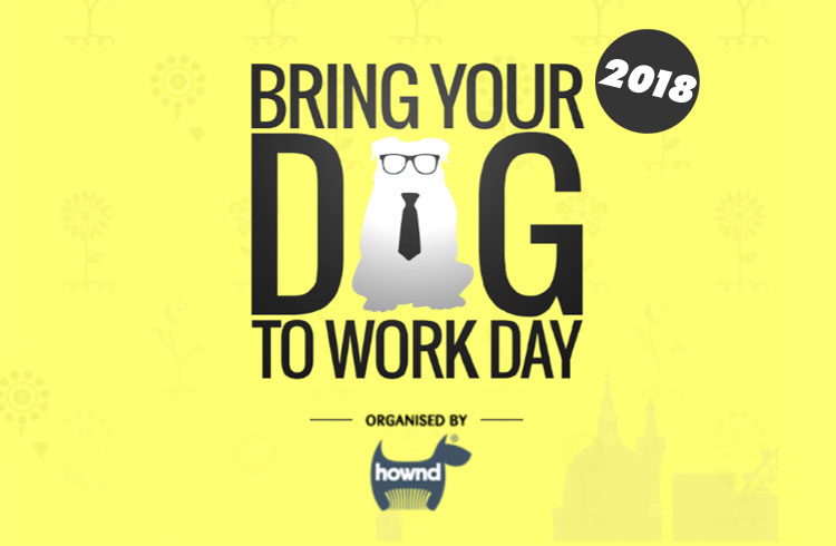 Bring Your Dog To Work Day 2018 - UK - Ollie & Penny Blog