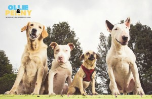 Top Dog Names of 2017 - Ollie & Penny Blog Ireland