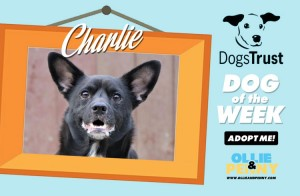Meet Charlie! Dogs Trust - Dog of the Week - Ollie & Penny Blog Ireland