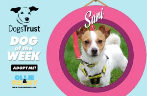 Meet Sari! Dogs Trust - Dog of the Week - Ollie & Penny Blog Ireland