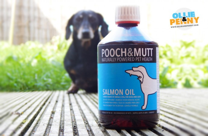 Salmon Oil and the Benefits for your Dog - Ollie & Penny Blog Ireland