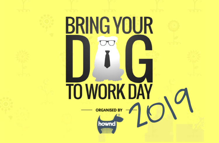 Bring your dog to work day 2019  - Ollie & Penny Blog - Irleland