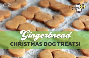 Gingerbread Christmas Dog Treats - Ollie & Penny, Ireland
