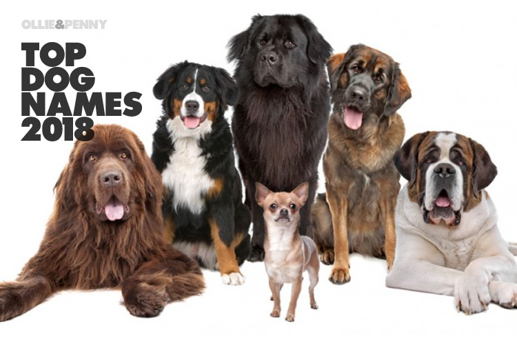 Top Dog Names of 2018