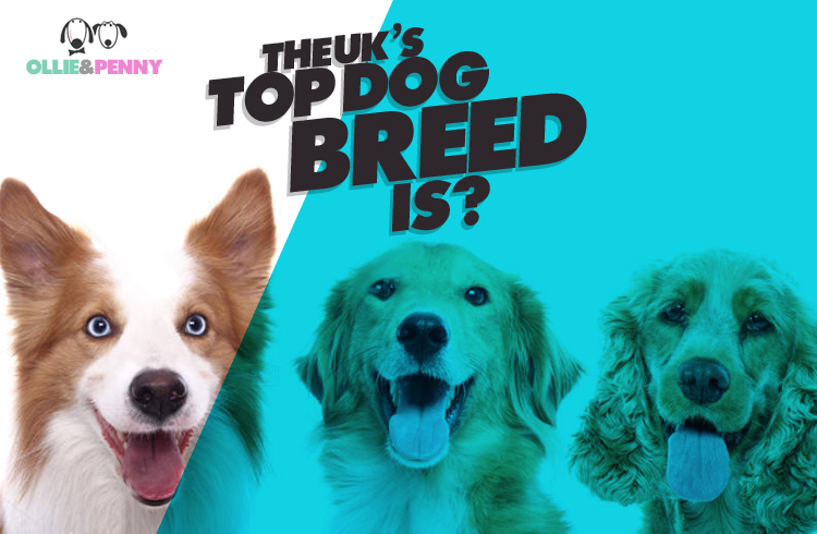 The UK's Top Dog Breeds 2019 - Ollie & Penny - Blog Ireland