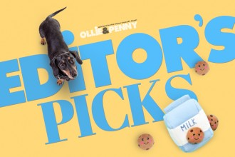 Editor's Pick: Zippypaws Milk & Cookies Burrow!