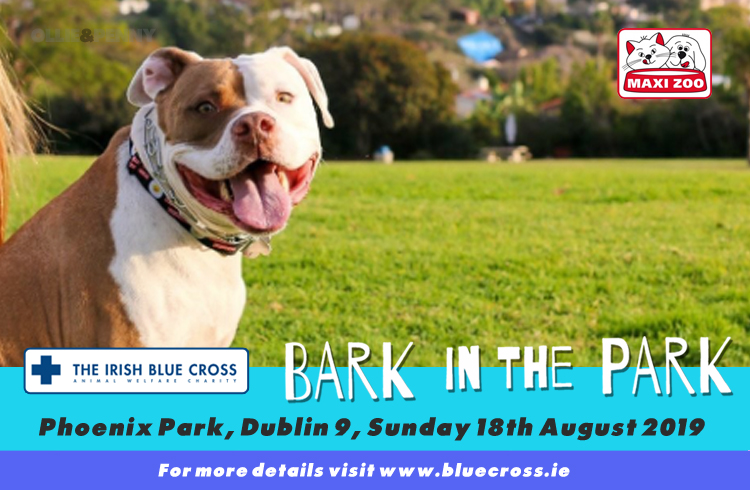 Event: Irish Blue Cross - Bark in the Park 2019 - Phoenix Park