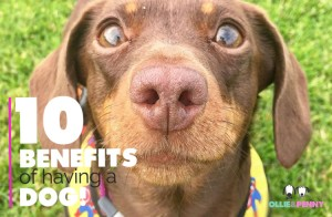 Ollie & Penny Blog - 10 Benefits of having a Dog